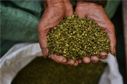 花椒的起源及麻味在川菜中的地位