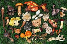 舌尖上的美味——野生菌,但它们的生长环境了解多少?